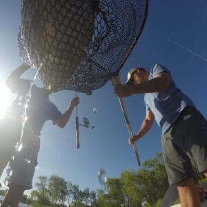 Netting Fish